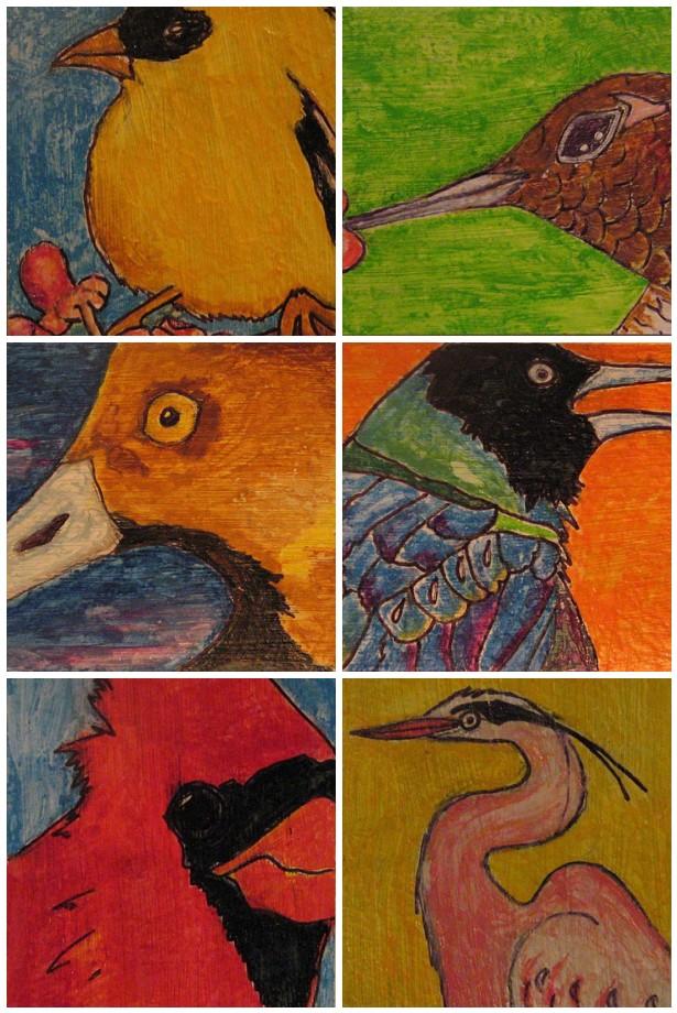 Jacisbirds