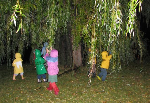 Willowtreeswinging