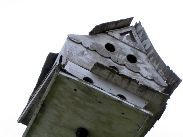 Bird house in the sky
