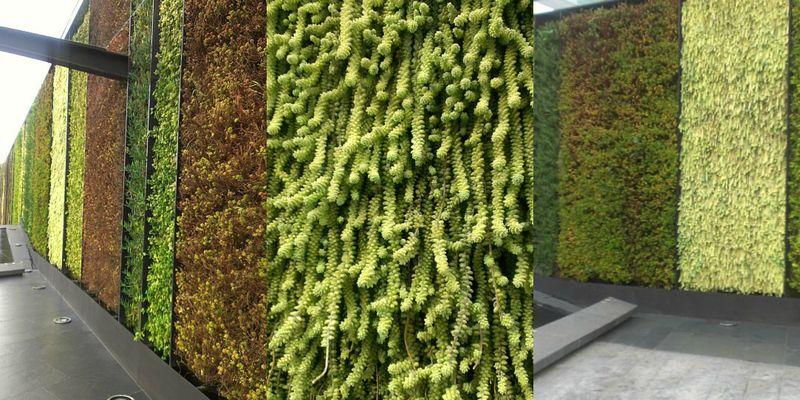 Succulentwall