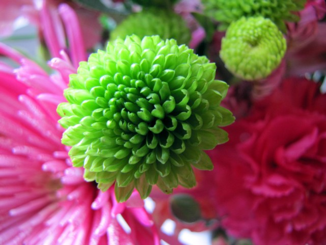 Green button flower