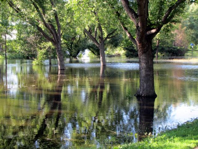 Treesandwater