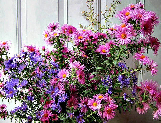 All the beautiful asters of autumn