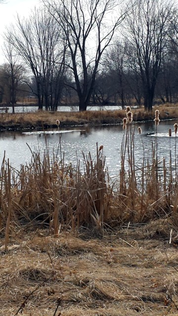 Marsh before