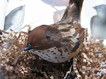 Bird3_1
