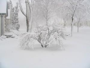 Snowy_1