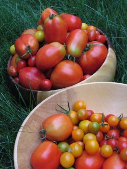 Tomatoesanyone